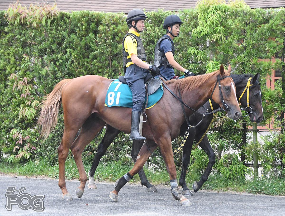 メイショウトラマツの馬体写真