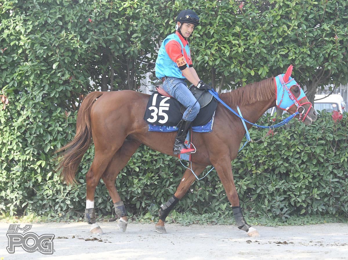 メイショウランマルの馬体写真