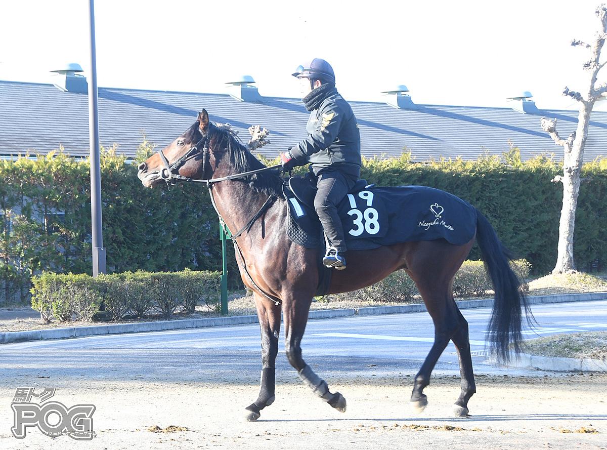 キクノエスペルトの馬体写真