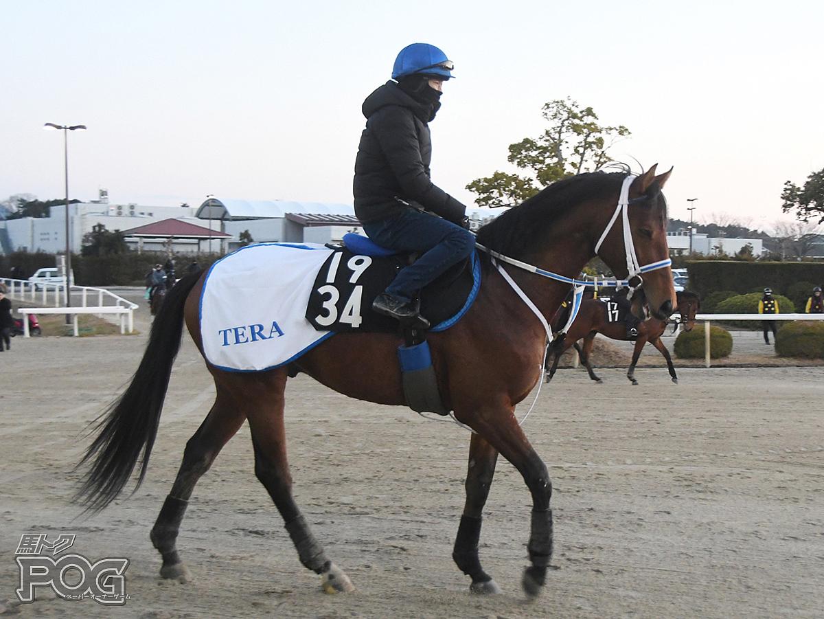 エレッサールの馬体写真