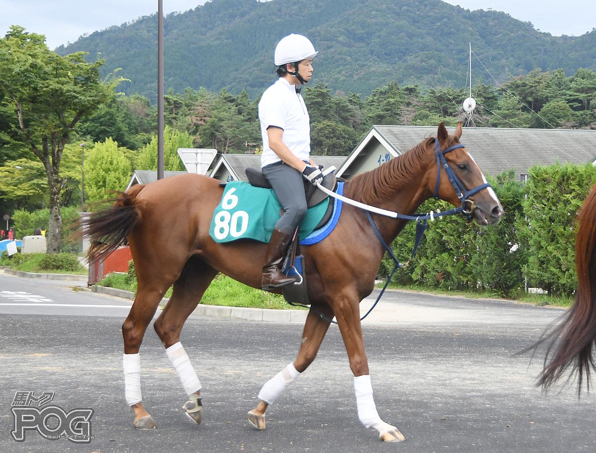 ナムラルビーの馬体写真