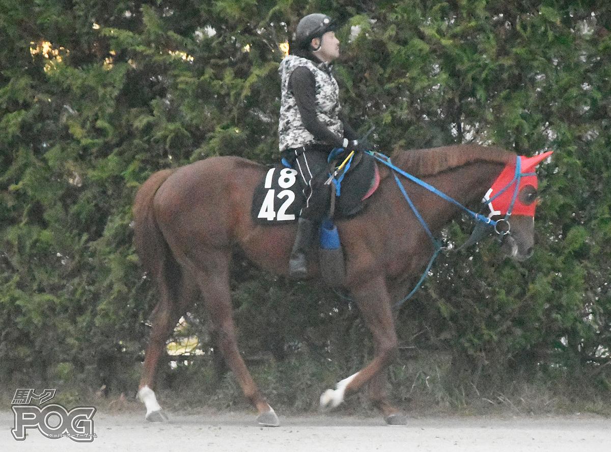 ナムラムツゴローの馬体写真