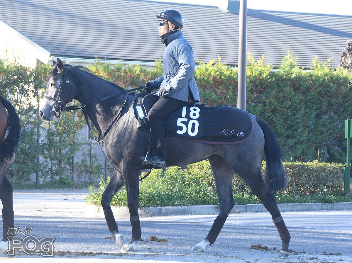 レッドアルジーヌの馬体写真