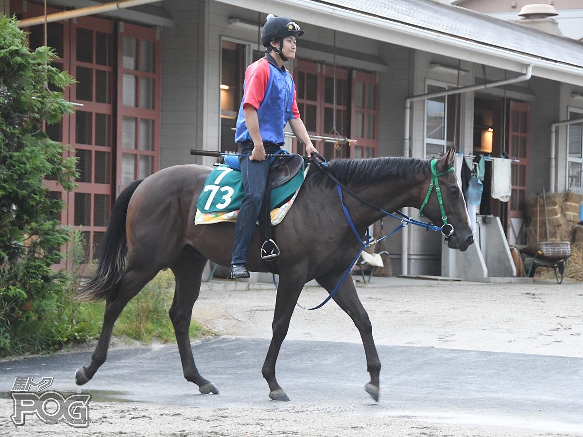 ペガッソの馬体写真
