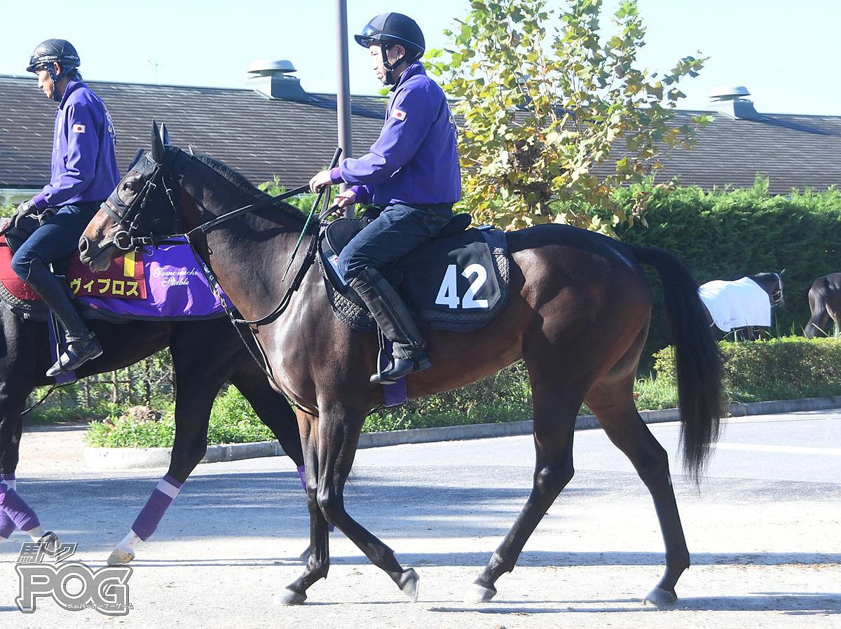 アドマイヤセレブの馬体写真