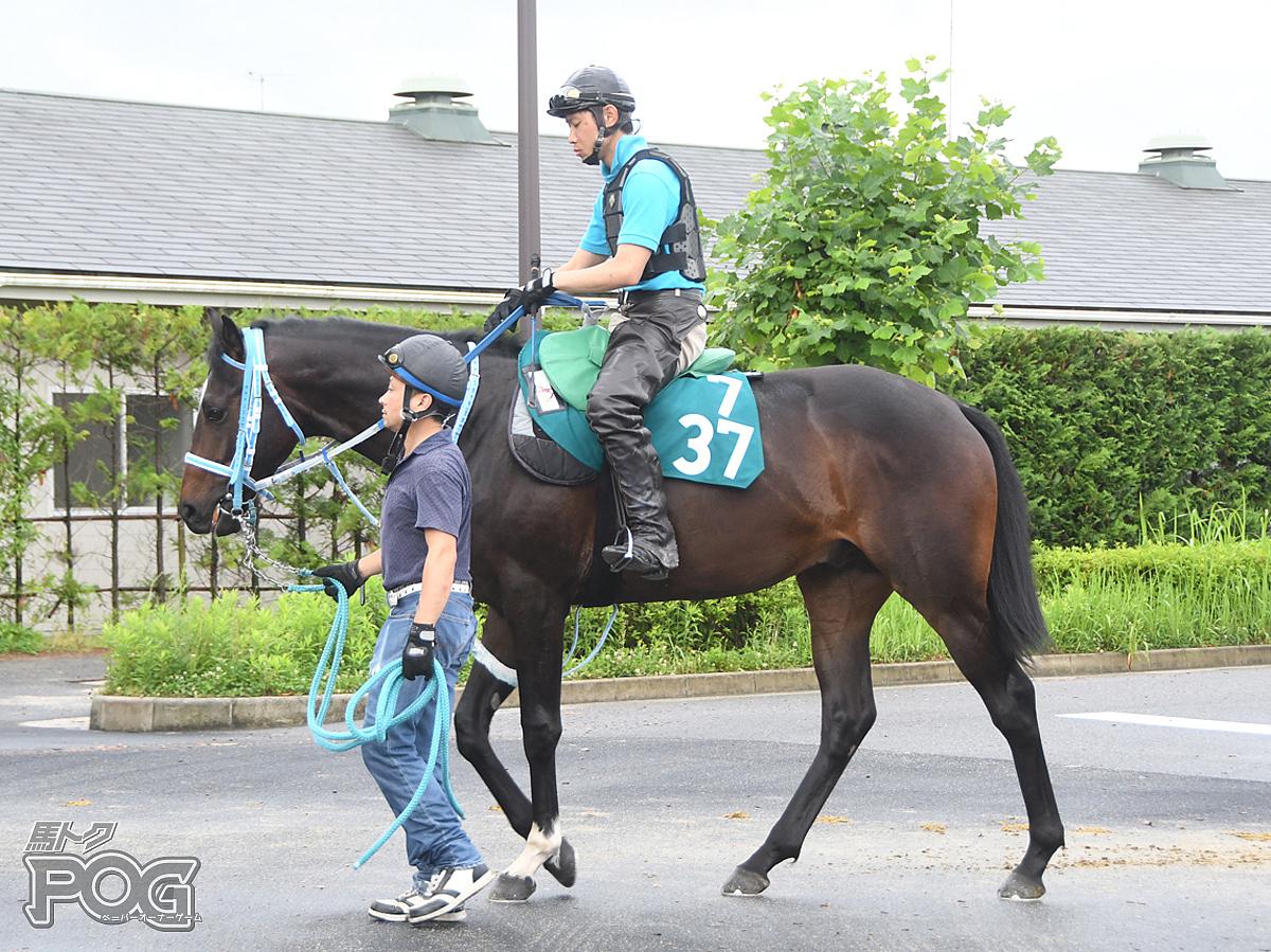 キタサンヴィクターの馬体写真