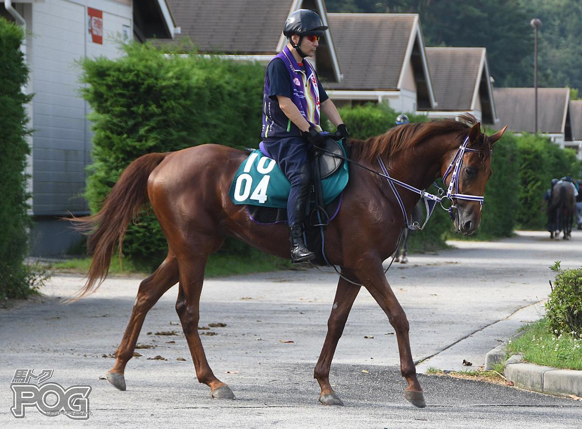 スズカビレッジの馬体写真