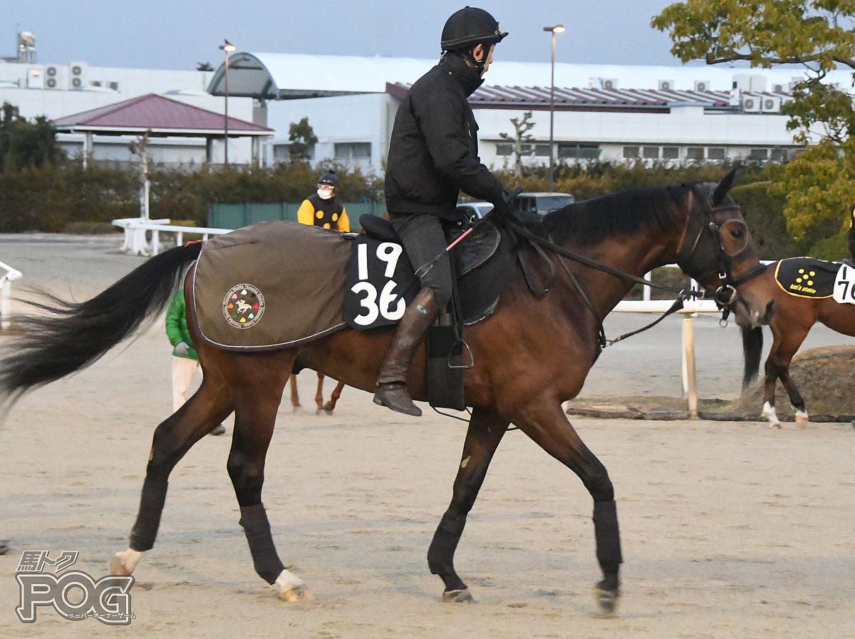オウケンジョーカーの馬体写真