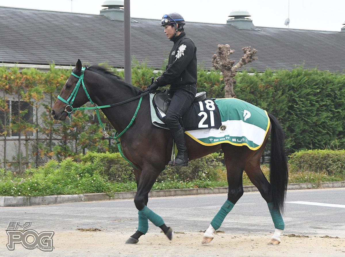 レッドラファーガの馬体写真
