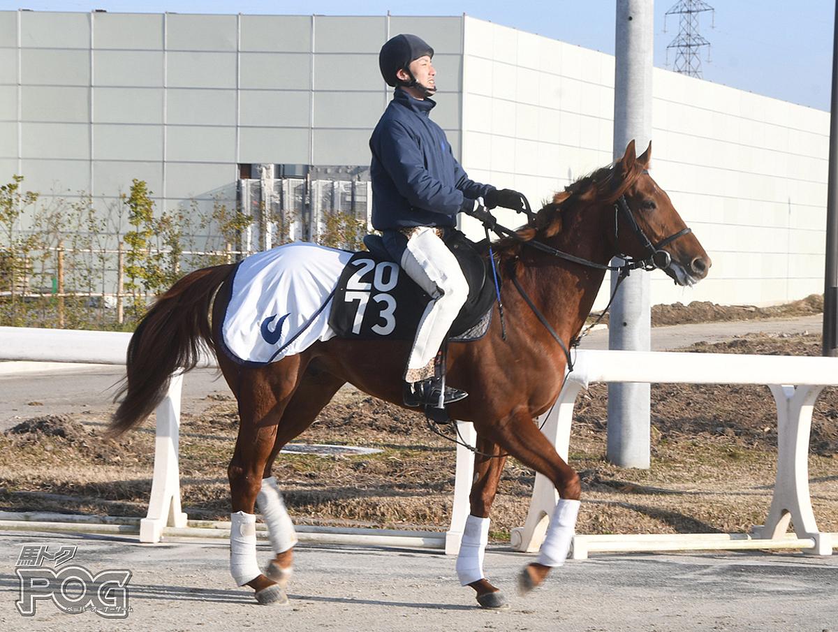 キラーチューンの馬体写真