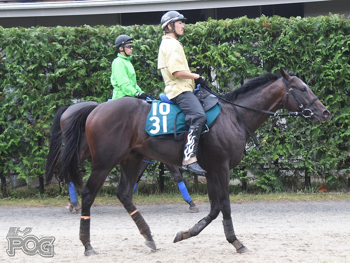 カズロレンツォの馬体写真