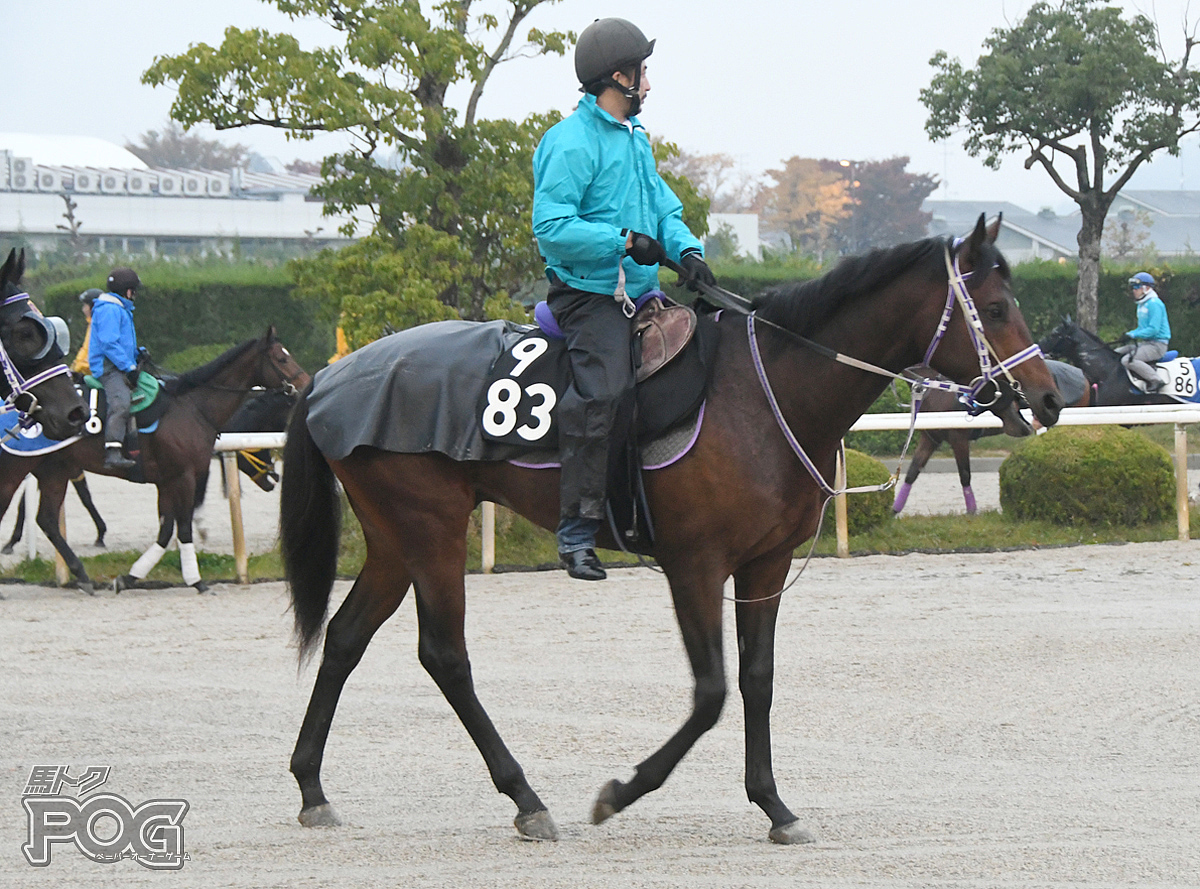 マンナムの馬体写真
