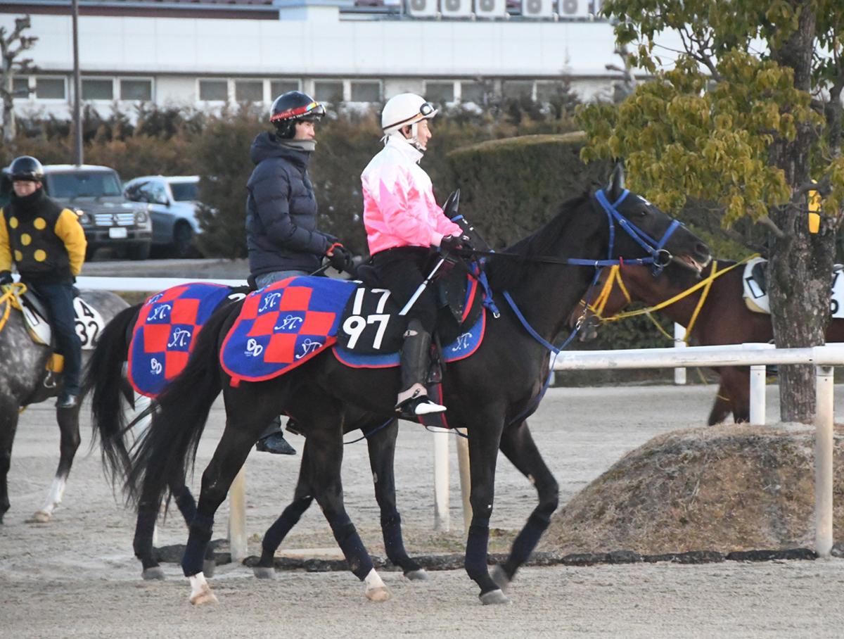 アンクルスターの馬体写真