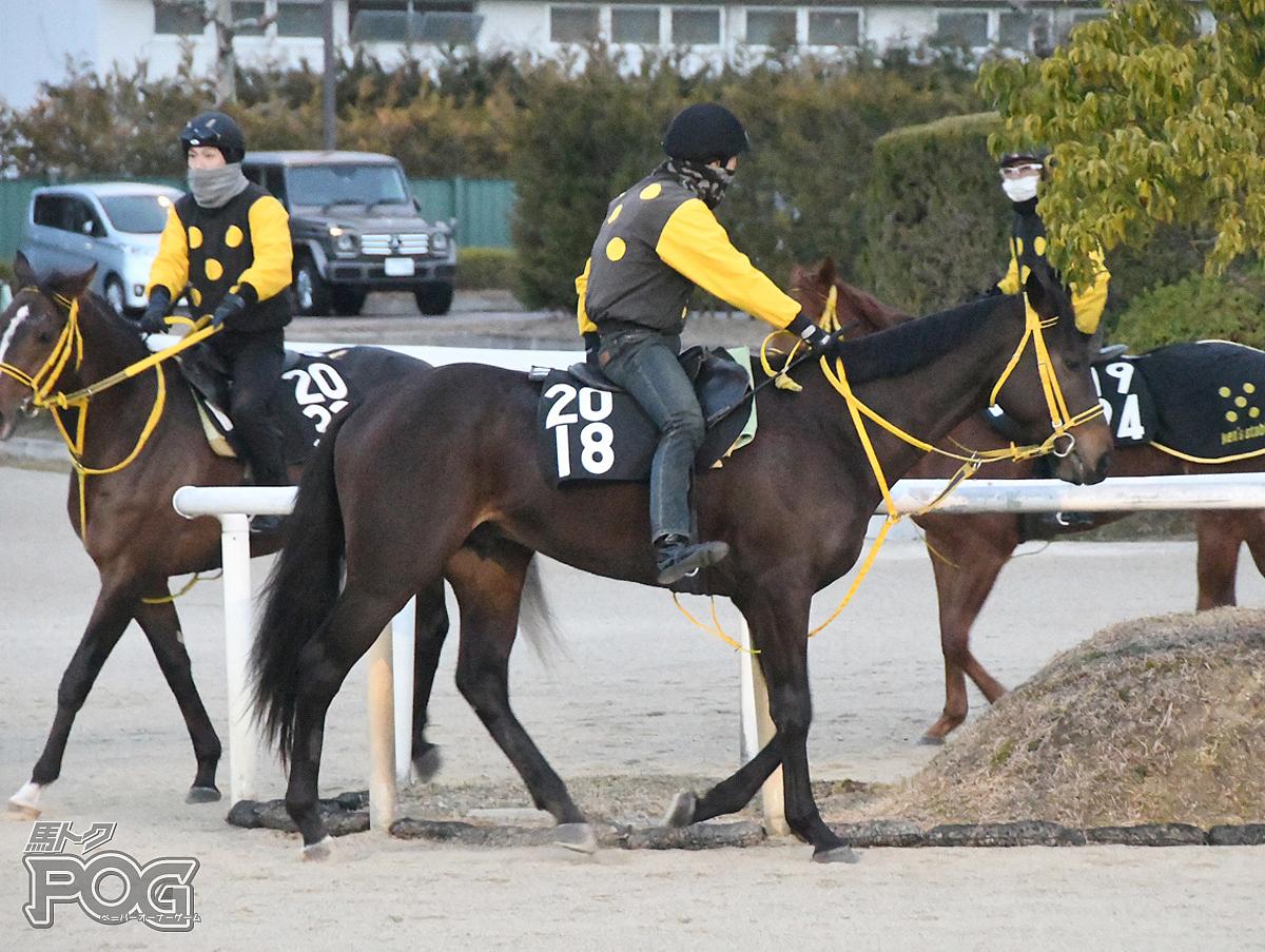 クレージーバローズの馬体写真