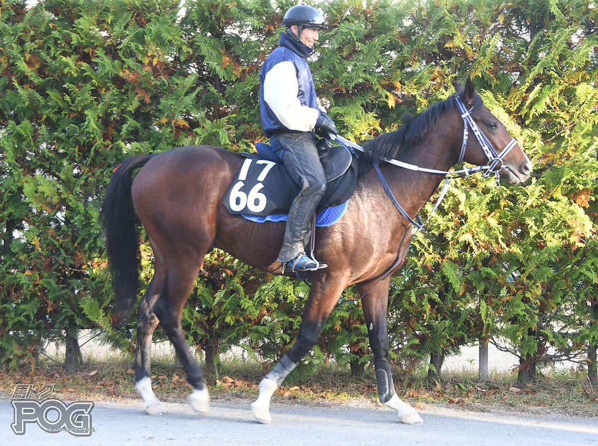 メイショウレイロウの馬体写真