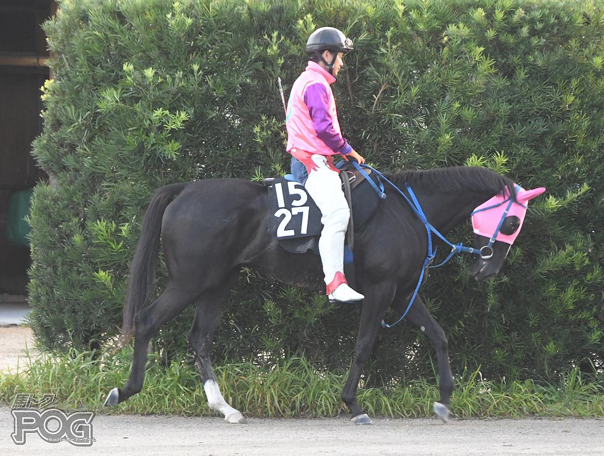 グランシェーヌの馬体写真