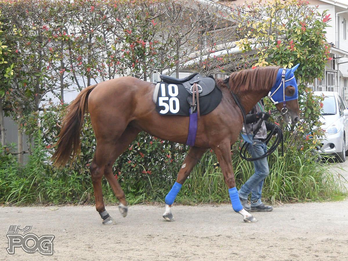 メイショウワザシの馬体写真