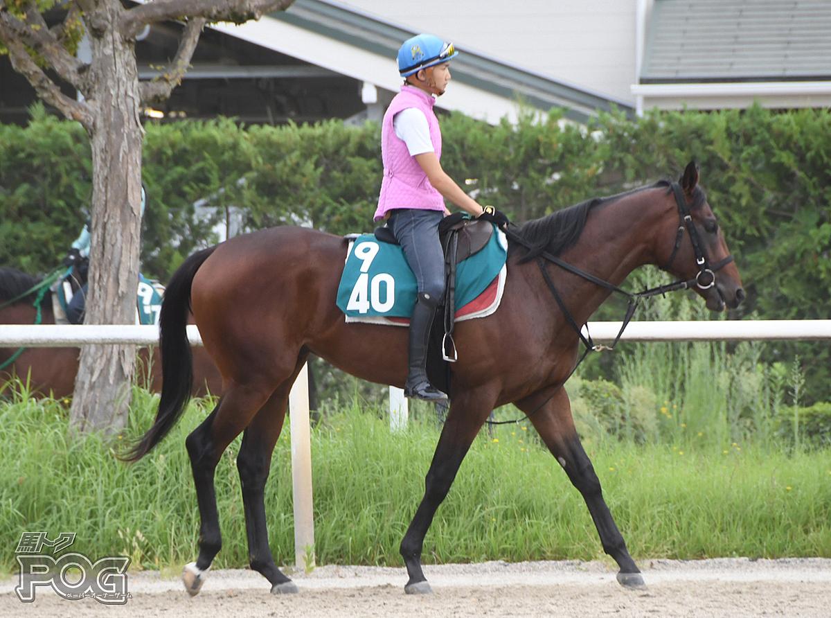 ナムラシシマルの馬体写真
