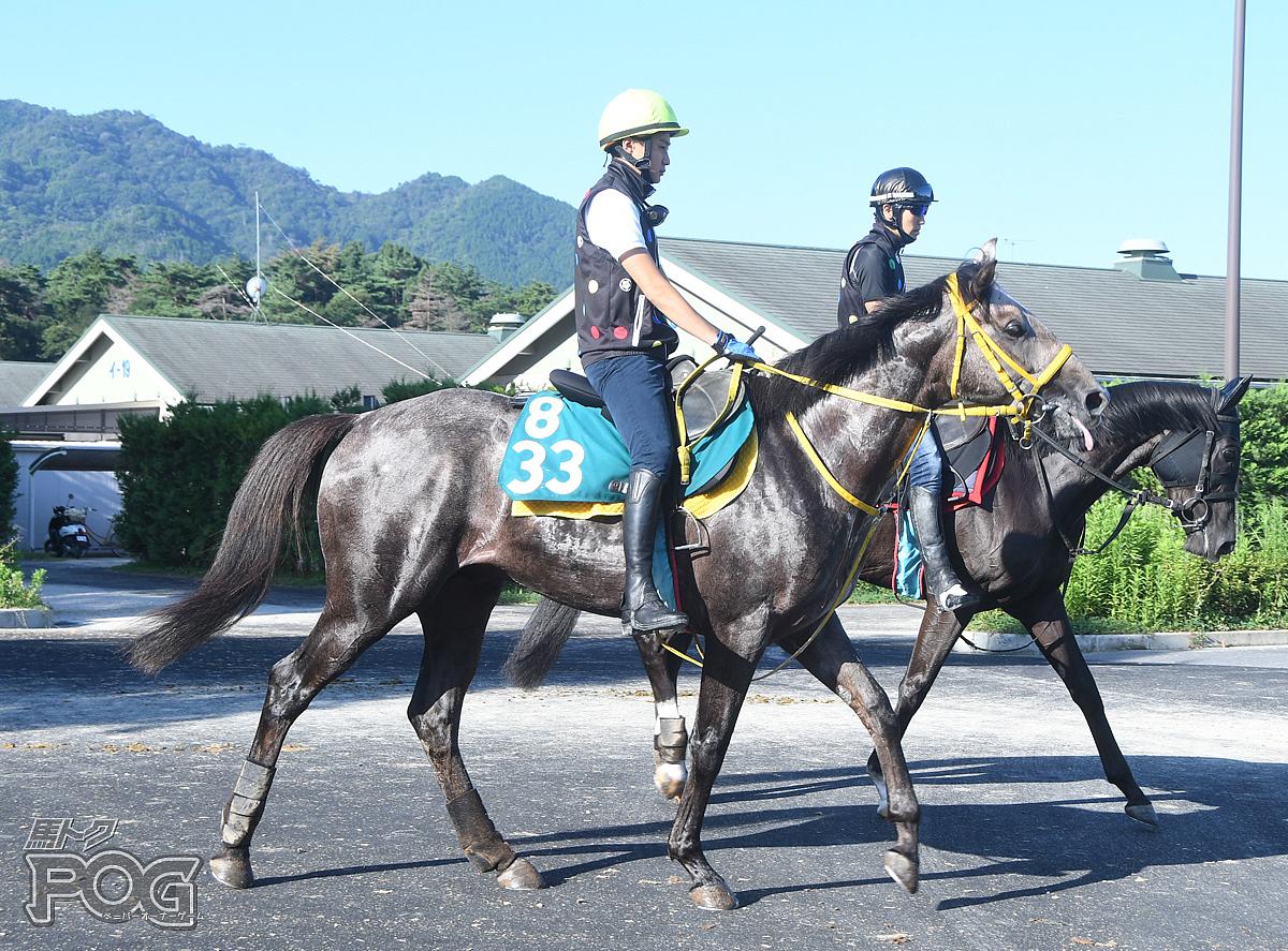 アスタービアンコの馬体写真
