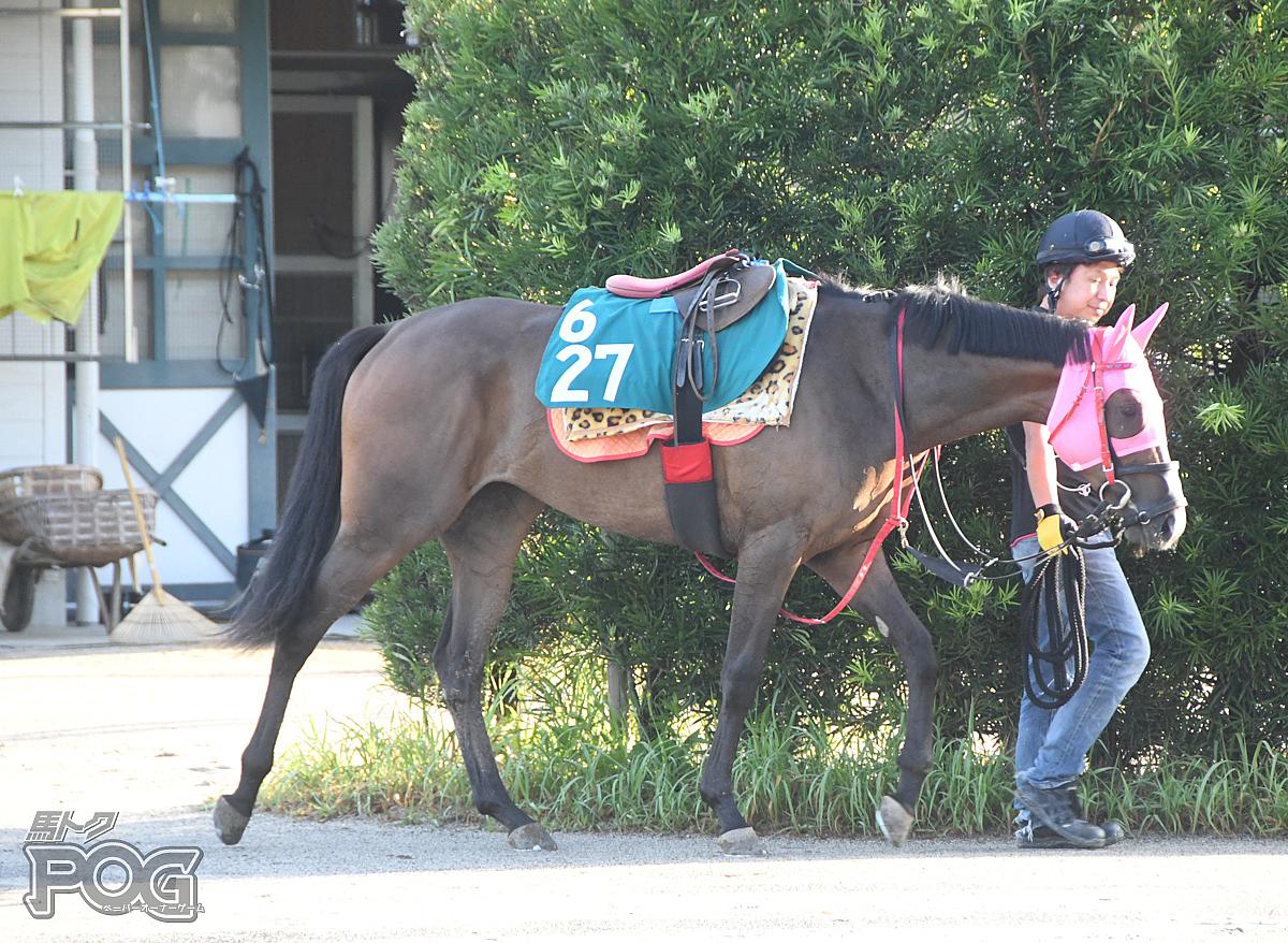 フェールデュビアンの馬体写真