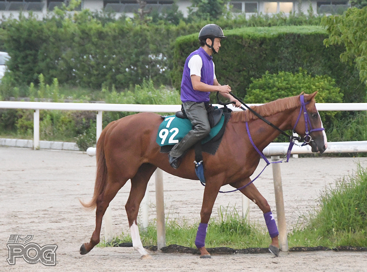 エーティーマゼランの馬体写真
