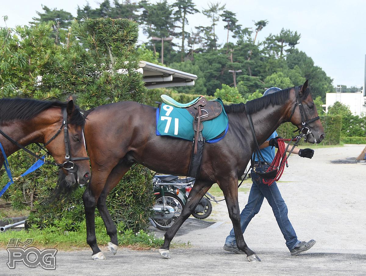 ラインアスターの馬体写真