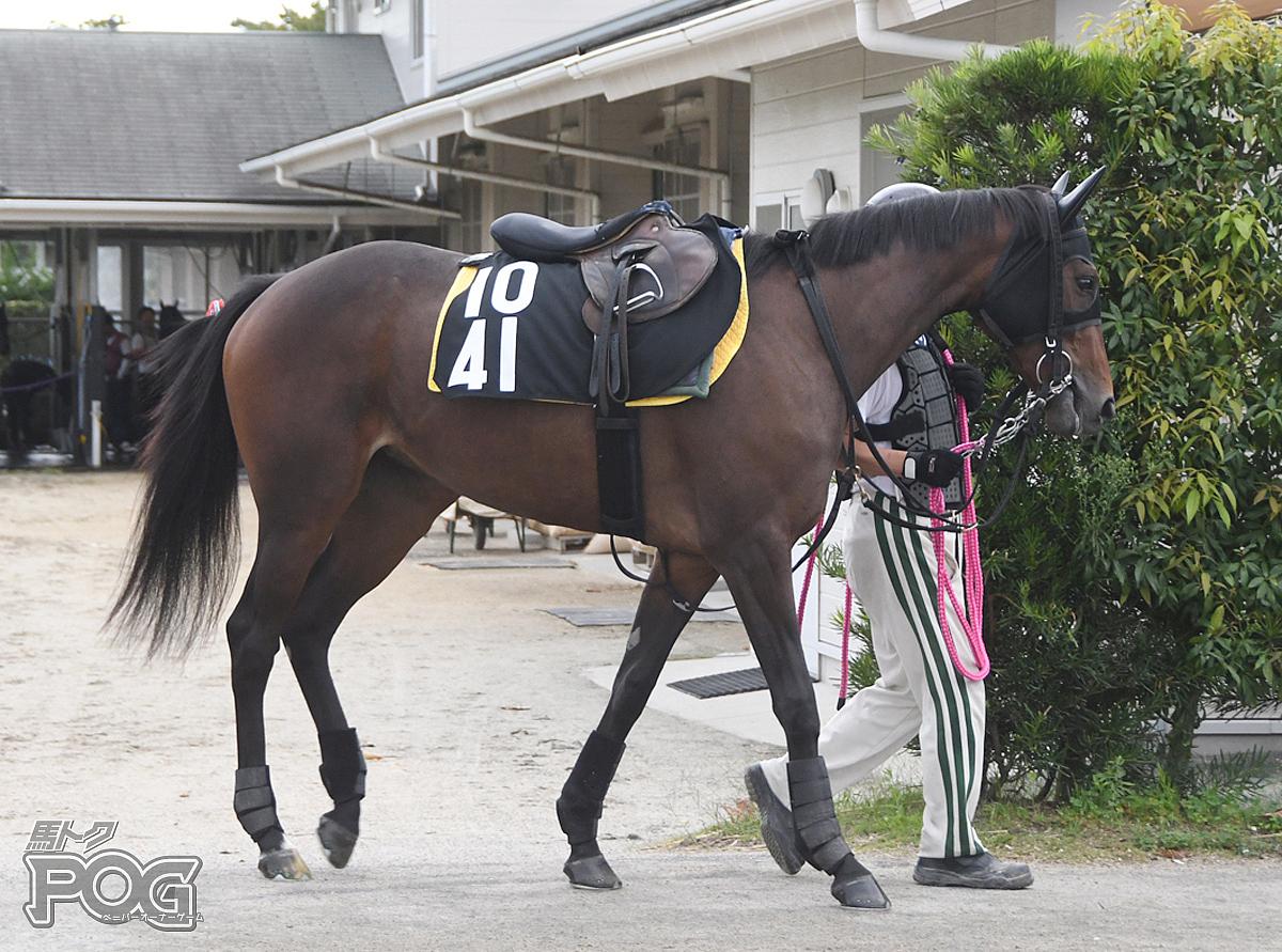 メイショウハニーの馬体写真