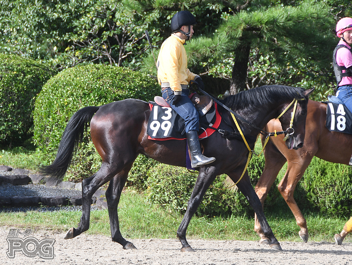 メイショウゴウリキの馬体写真