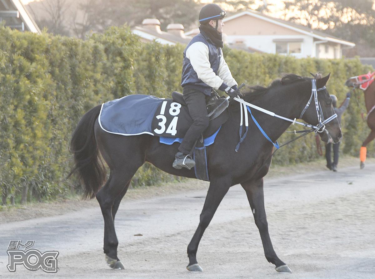 メイショウロセツの馬体写真