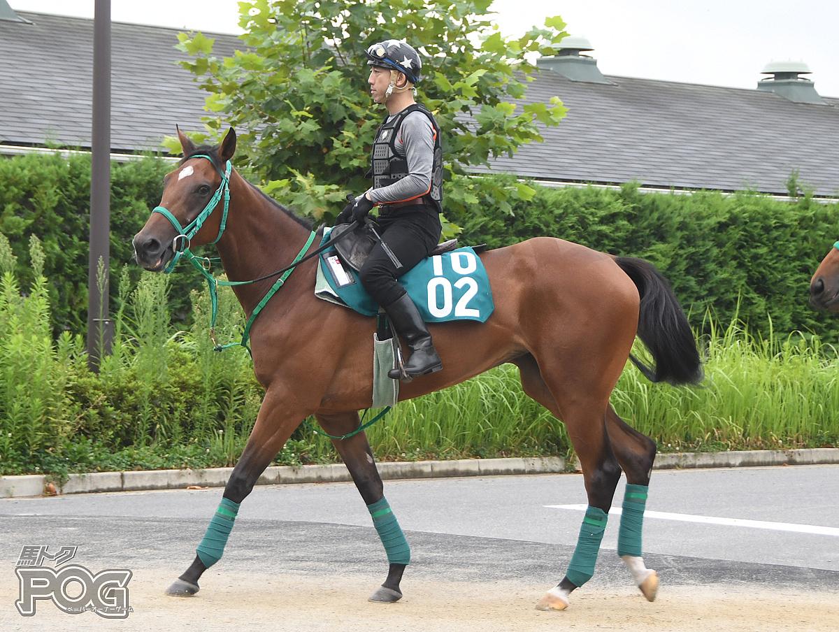 カンタービレの馬体写真