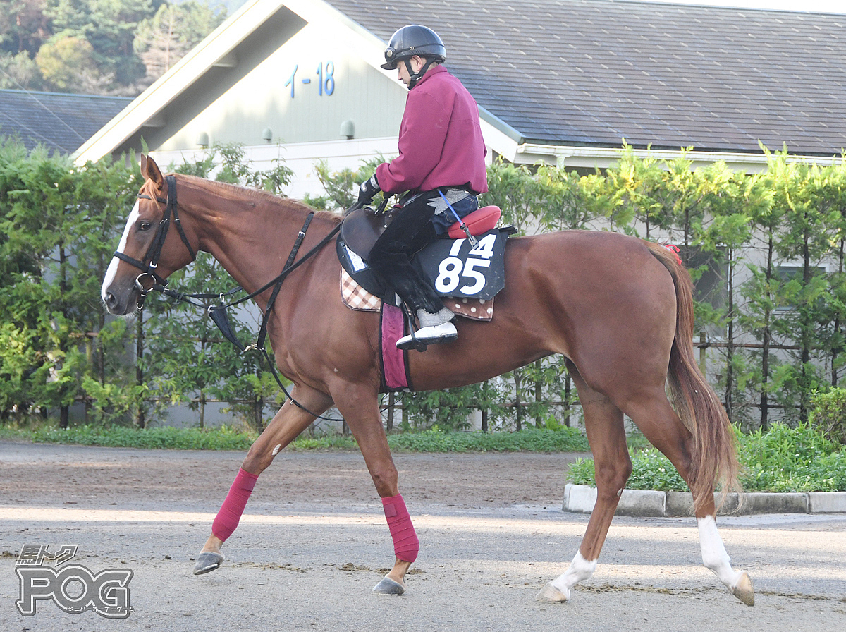 メイショウセレーノの馬体写真