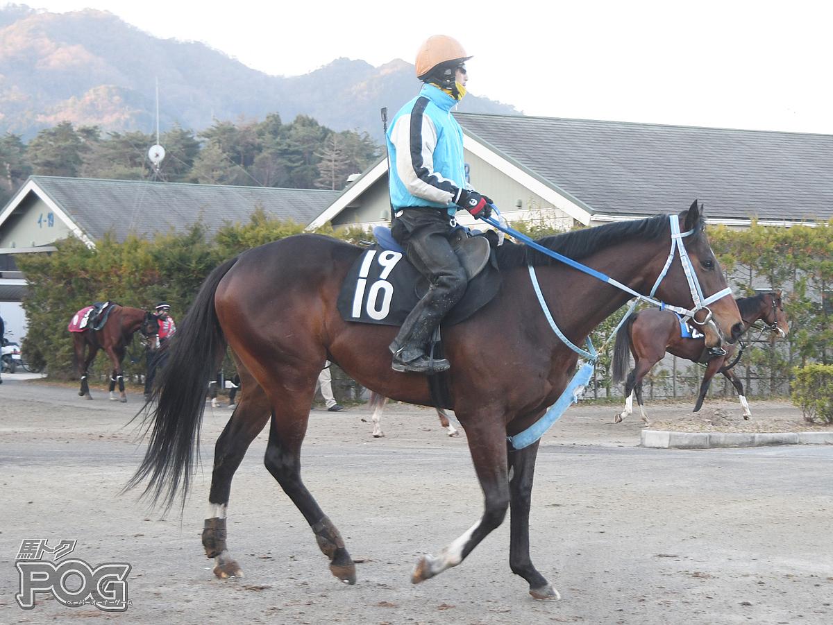 コンコルドコンドルの馬体写真