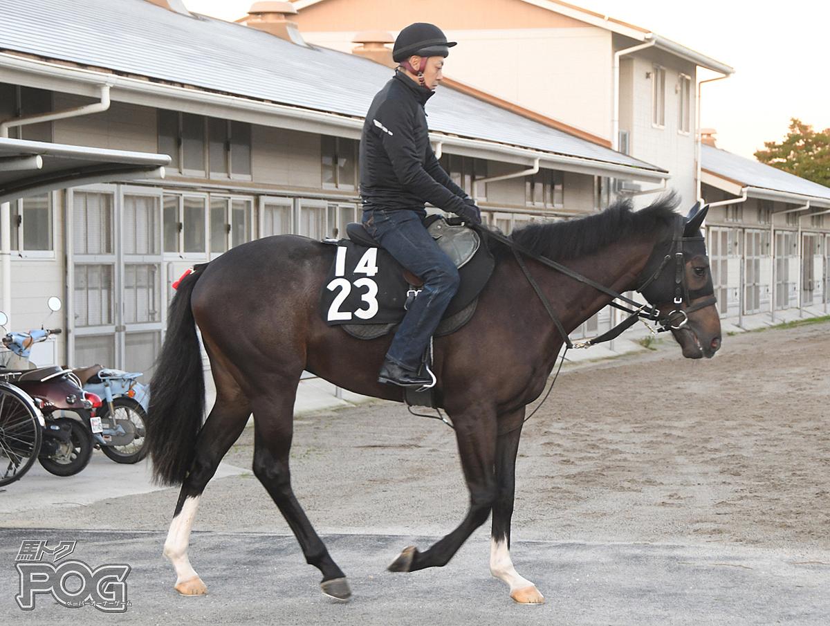 メイショウミナモトの馬体写真