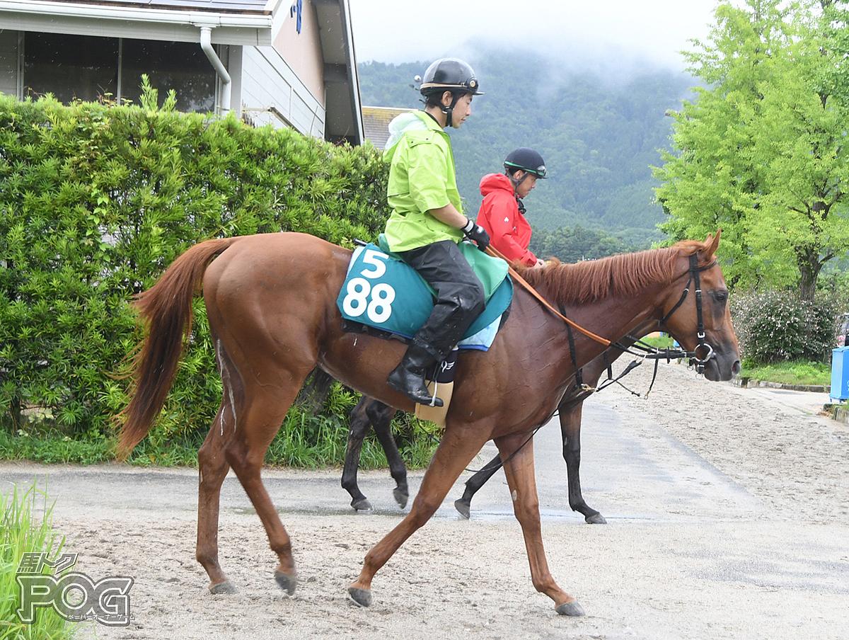 メイショウタイシの馬体写真