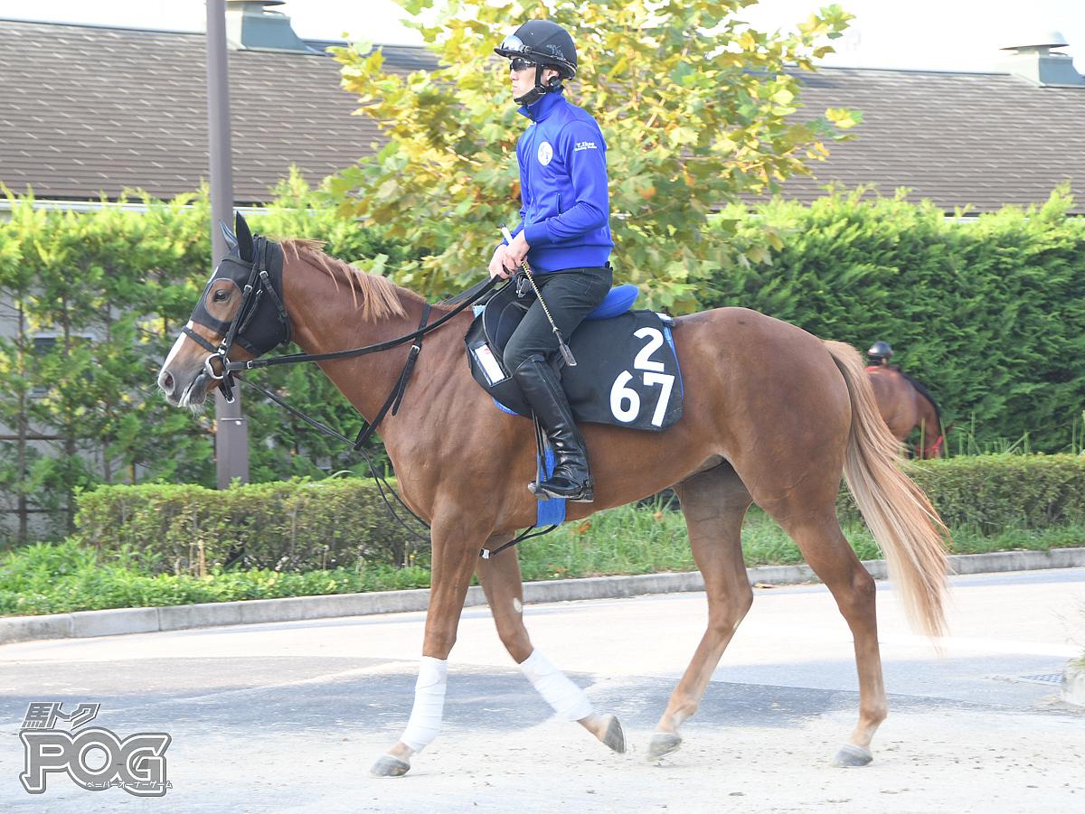 グアンの馬体写真
