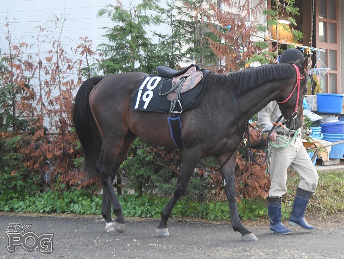 メイショウアドリアの馬体写真