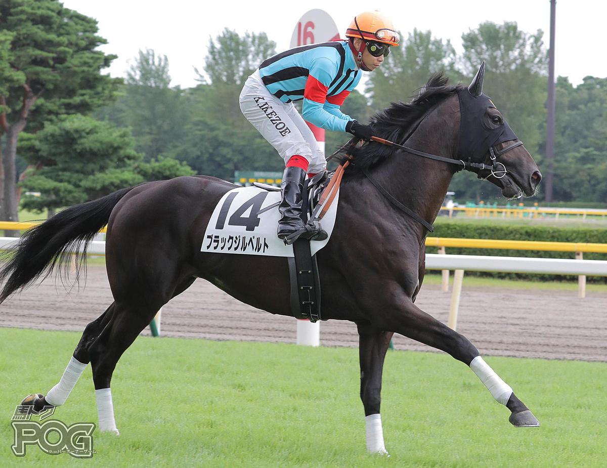 ブラックジルベルトの馬体写真