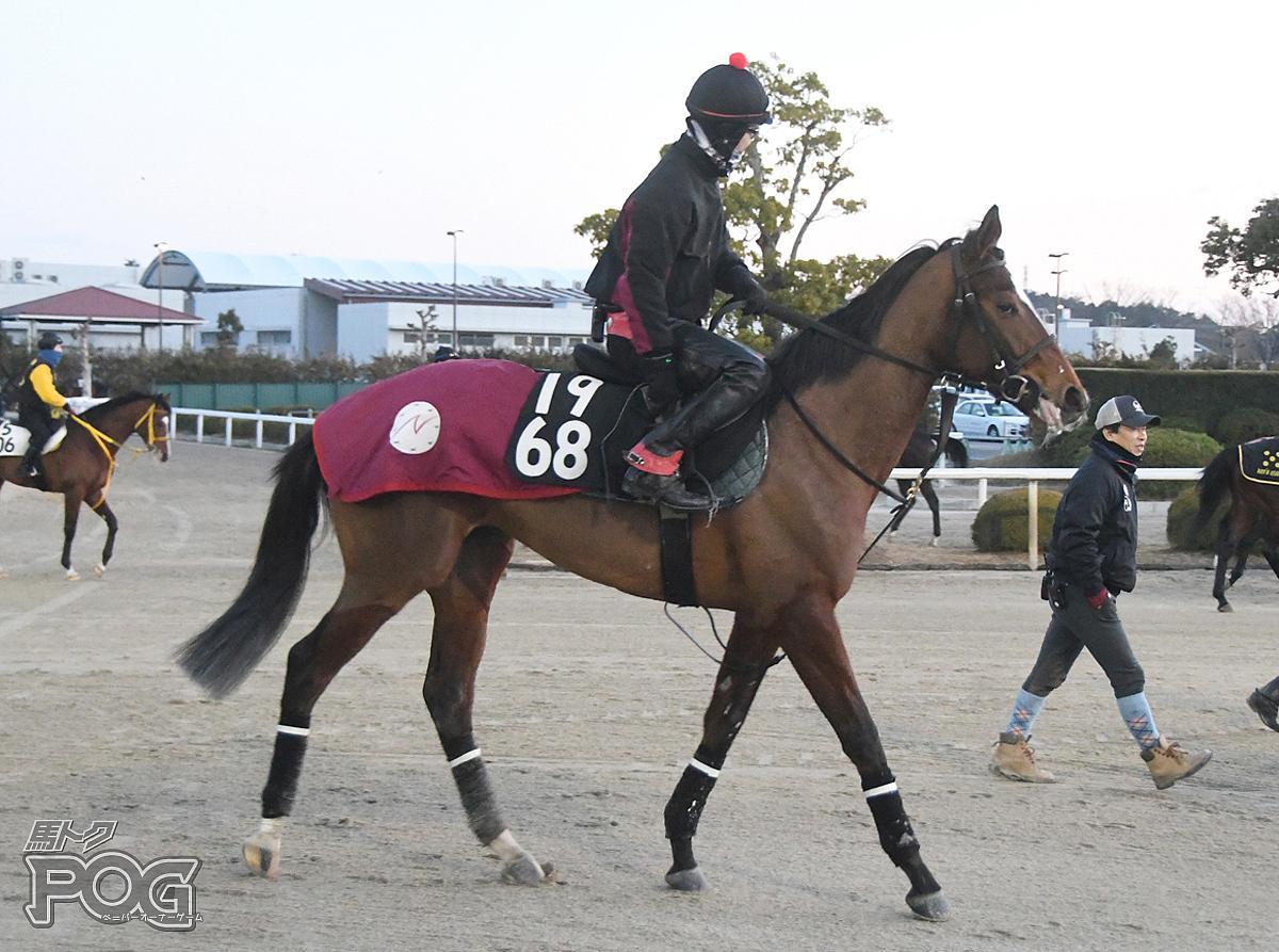 ミッキーチャームの馬体写真