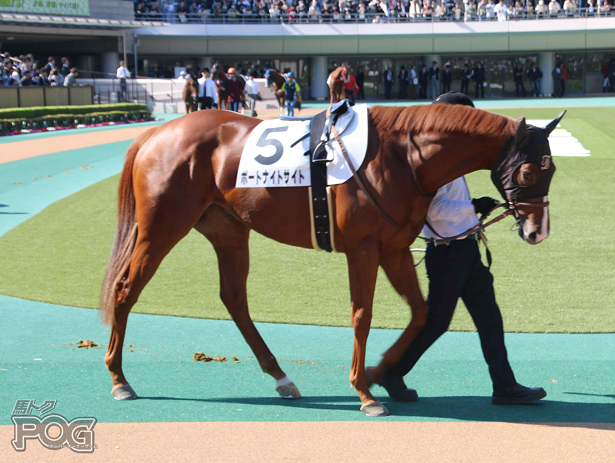 ポートナイトサイトの馬体写真