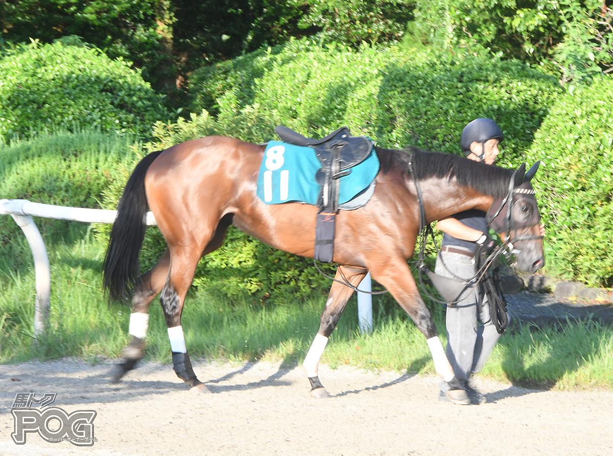 アプローズの馬体写真