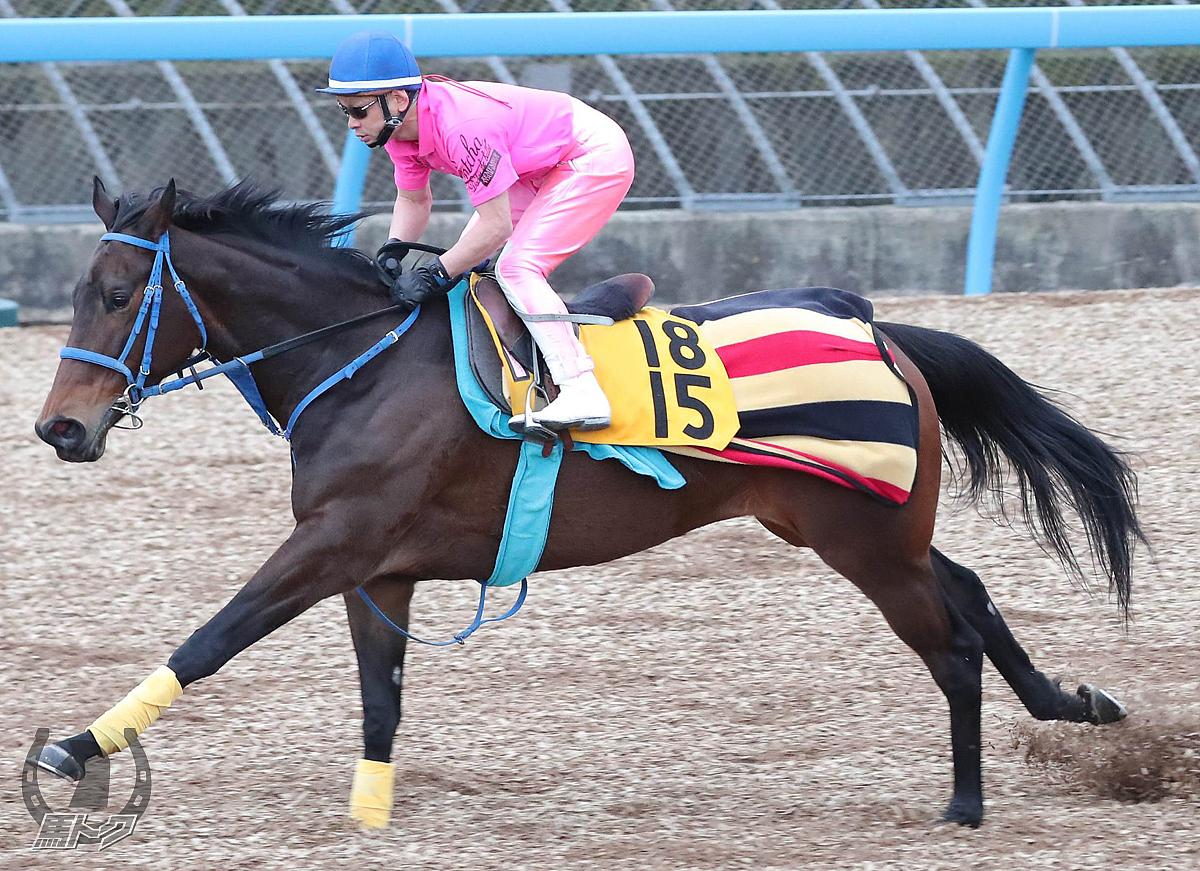 モルフェオルフェの馬体写真