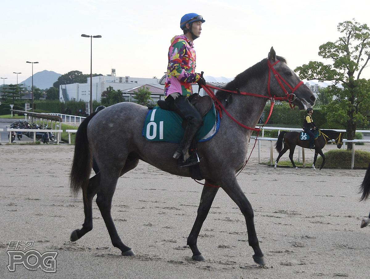 コラードの馬体写真
