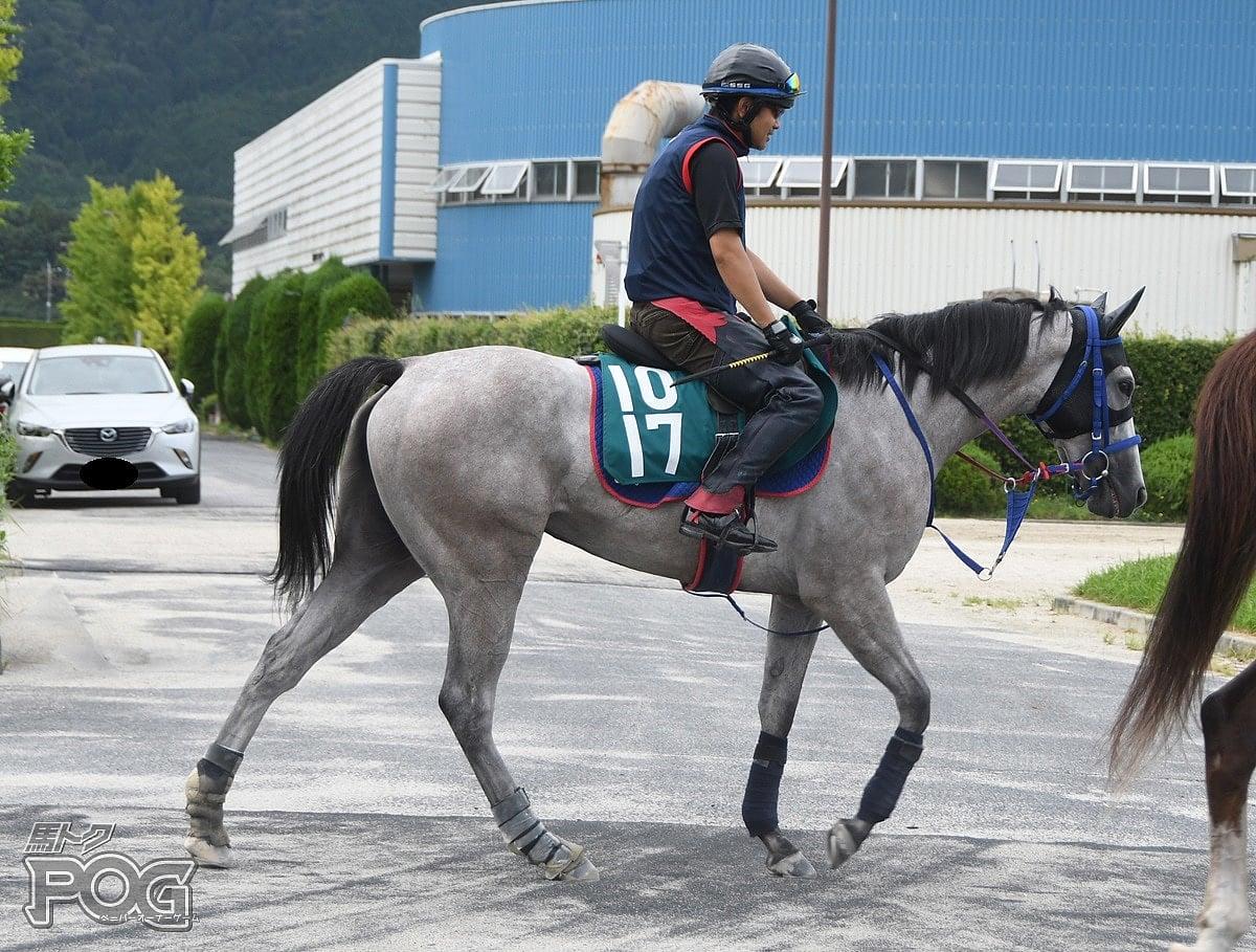 ドンナビアンカの馬体写真