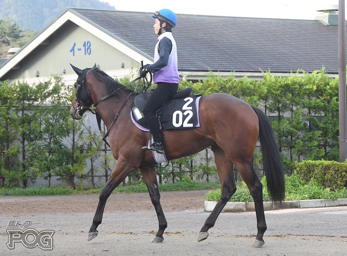 ガウルの馬体写真