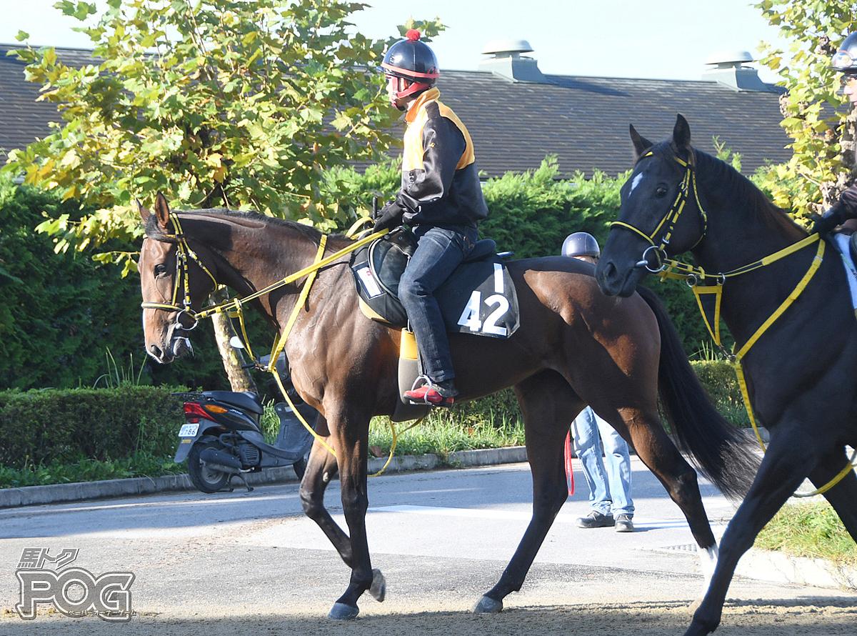 ウォーターリバースの馬体写真