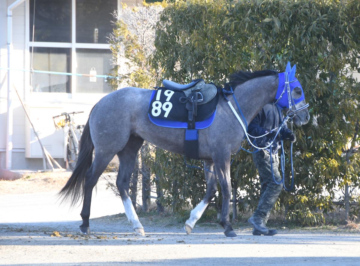 ウォーターステラの馬体写真