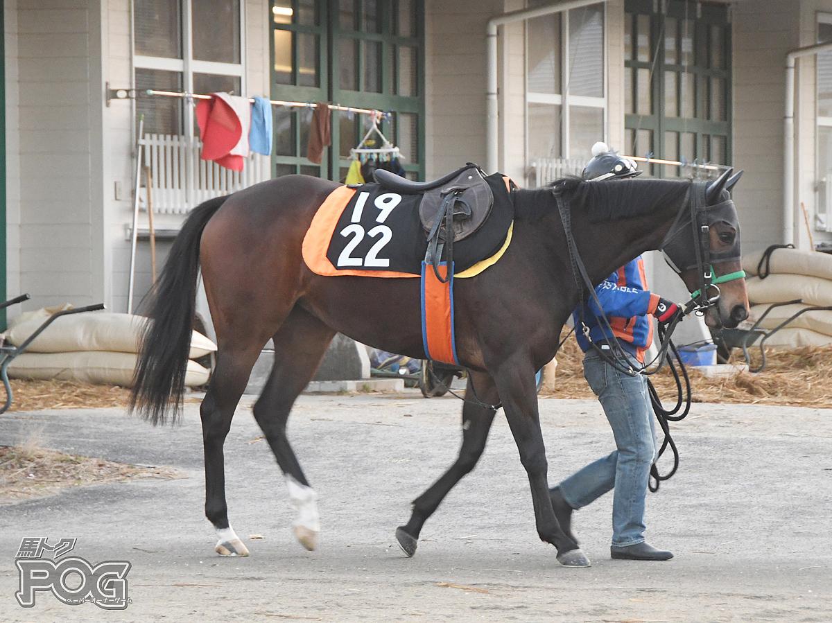 ウォーターシドモアの馬体写真