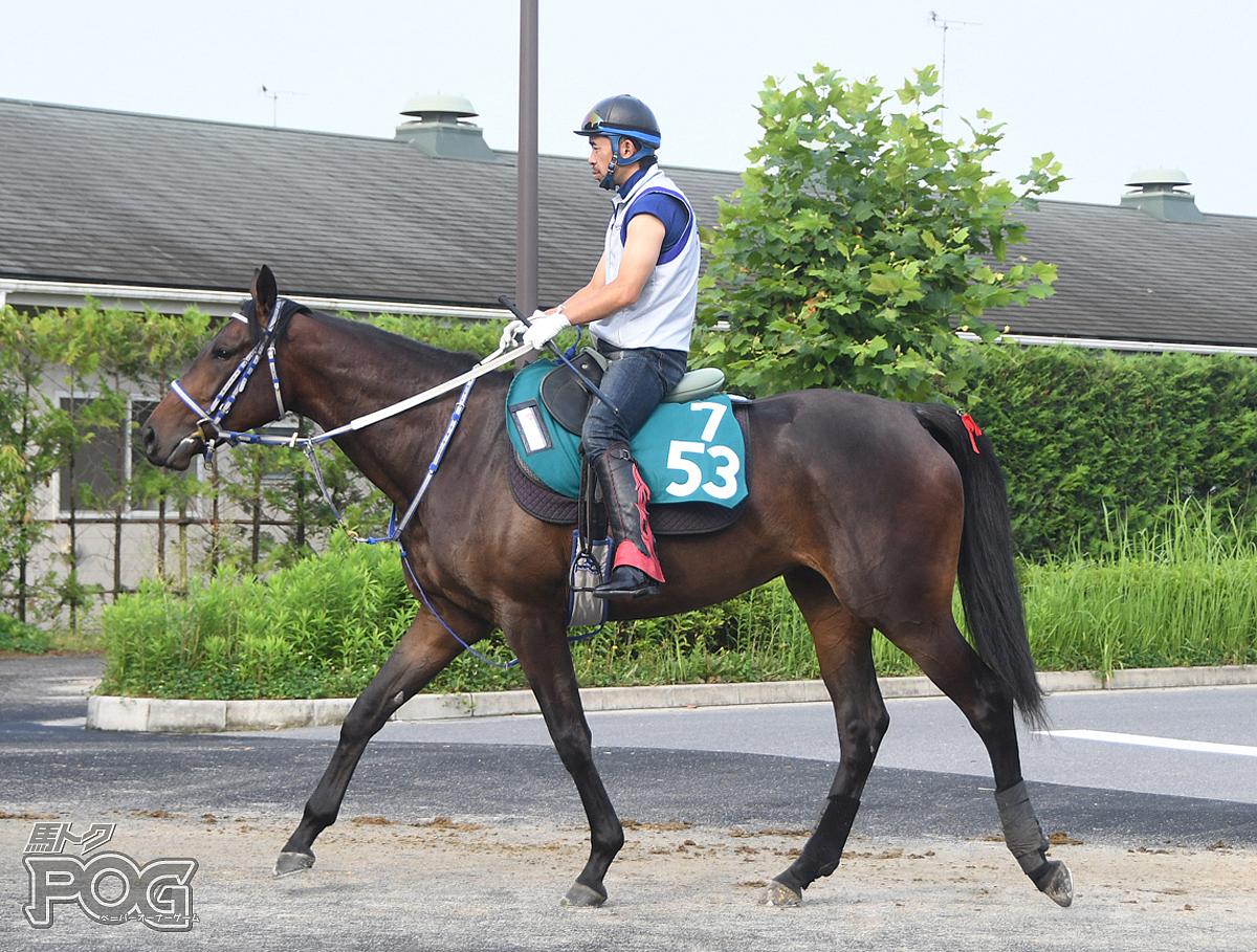メイショウタンゴの馬体写真