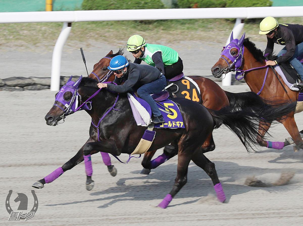 ゴールドギアの馬体写真