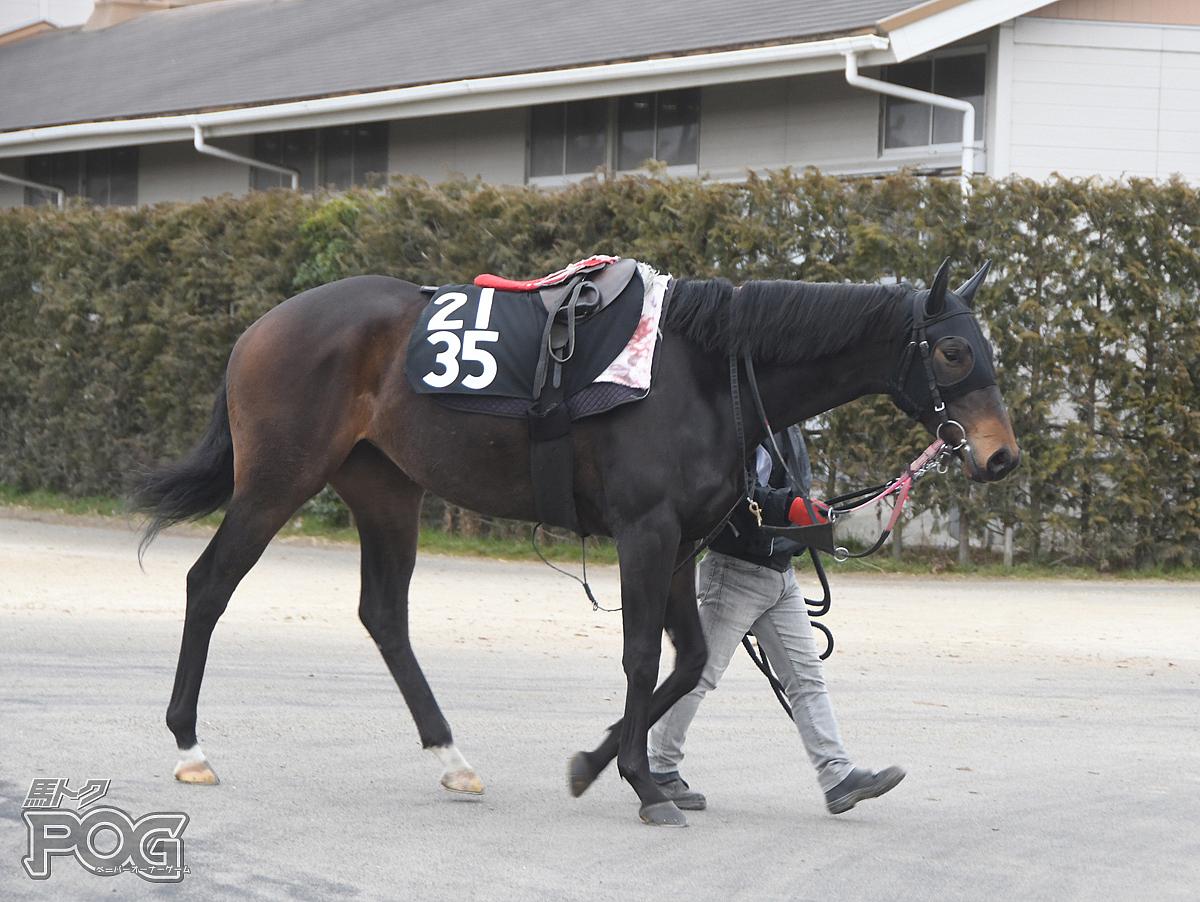 チアフルルックの馬体写真